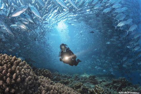 Dive Sipadan by Cult Dive Barracuda Point Sipadan Island