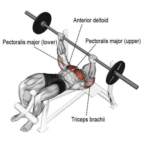 Decline Bench Grip Triceps Press by Most Effective Chest Exercises According To Science