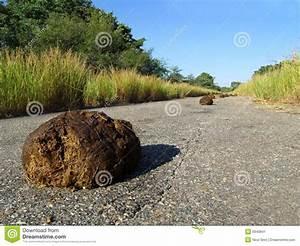 Elephant Dung Stock Image - Image: 5940841