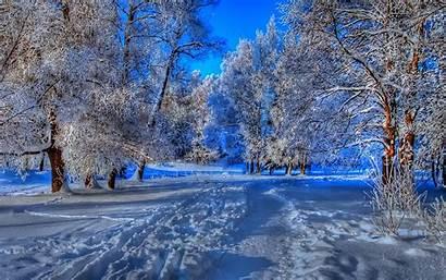 Winter Forest Path Wallpapers Nature Seasons Desktop