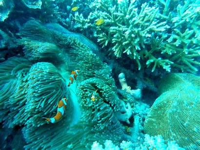 Vaquita Nemo Finding Underwater Gifs Clownfish Dolphin