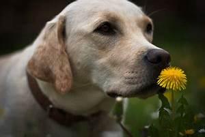 Hund Im Garten Vergraben : hund im garten begraben ~ Lizthompson.info Haus und Dekorationen