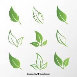 Green Leaf Vector Free Download