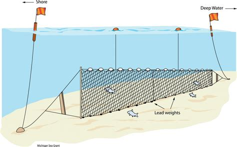 fishionary  blog  fish words