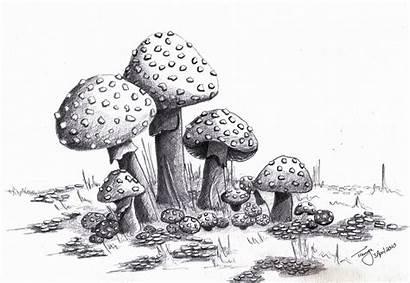 Mushrooms Mushroom Drawing Drawings Fairy Pencil Deviantart