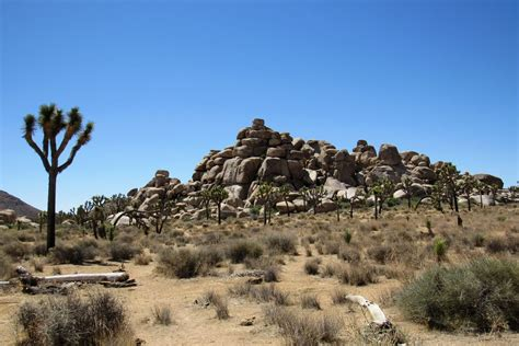 Joshua Tree National Park Is Being Damaged During The