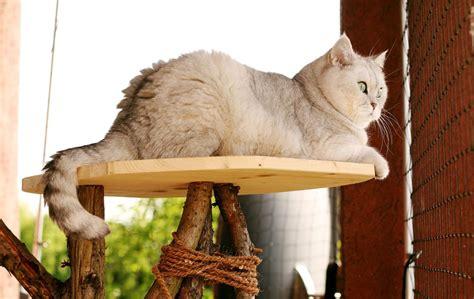 Katzen Wandbrett Selber Bauen by Kratzbaum Aus Baumstamm Selber Bauen Anleitung Und Tipps