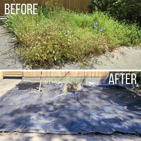 revive  overgrown garden  handymans daughter