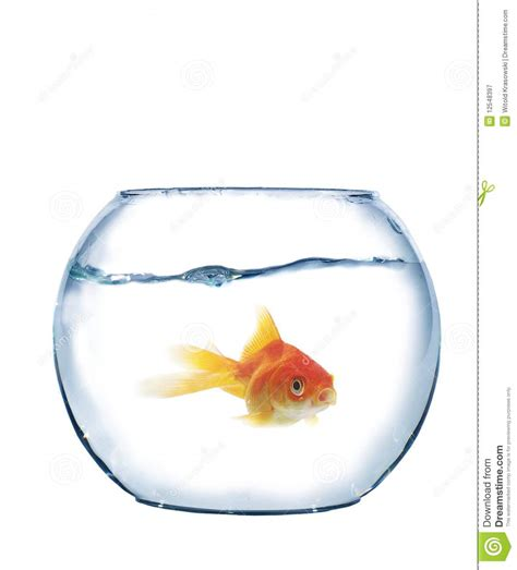 fish in spherical aquarium royalty free stock photography image 12548397