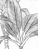 Lei Maile Drawing Tattoo Getdrawings sketch template