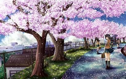 Sakura Bunga Gambar Garden Cantik Play Wallpapers