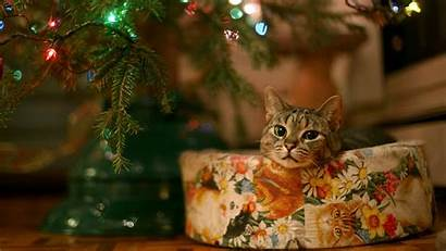 Christmas Cat Cats Tree Widescreen Under Wallpapers