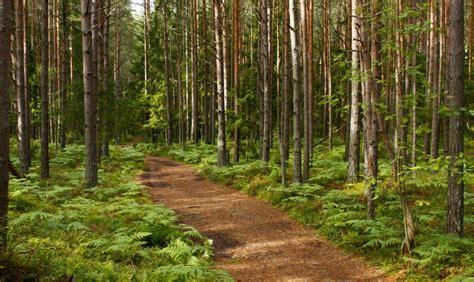 Krustpils novada pašvaldība dabas taku izveidei lūgs ...