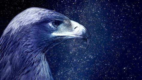 blue eagle   starry night sky hd wallpaper