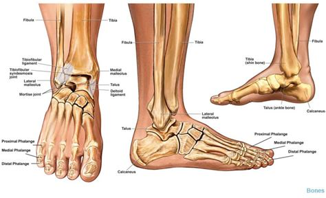 How To Prevent Ankle Problems