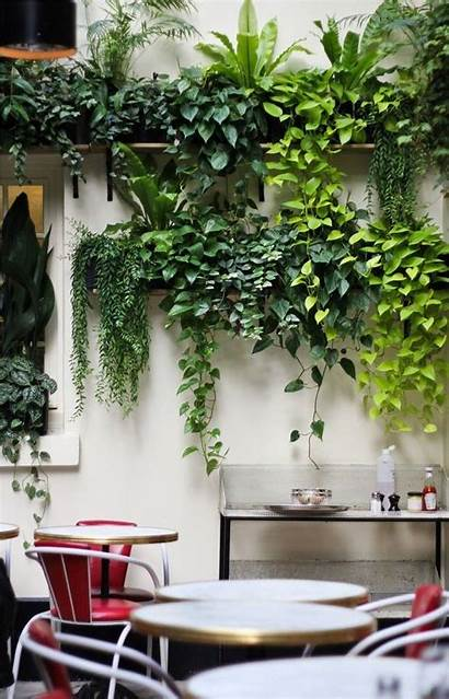 Indoor Plants Decor Awesome Apartment Trendehouse