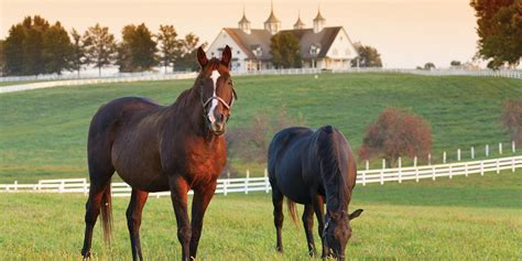 horse property farms ranches country equine properties