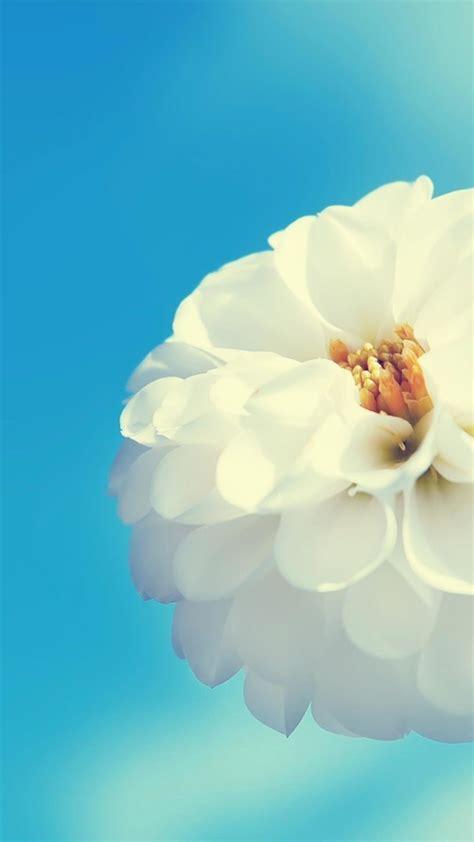 sfondi tumblr fiori  immagini