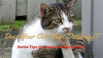 cat dandruff causes why does my cat dandruff treatment and cure cat