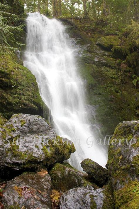 Quinault Rainforest Falls Waterfall Photography Digital Fine