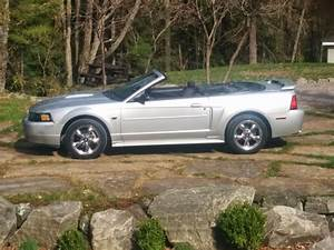 2001 Mustang GT Convertible for sale - Canadian Mustang Owners Club - Ford Mustang Forums