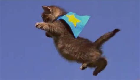 home flying cat web site design