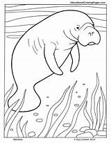Manatee Coloring Pages Mammals Animal Printable Manatees Dugong Cute Animals Print Ocean Drawings Colouringpages Learning Adult Florida Orca Ibex Intrepid sketch template