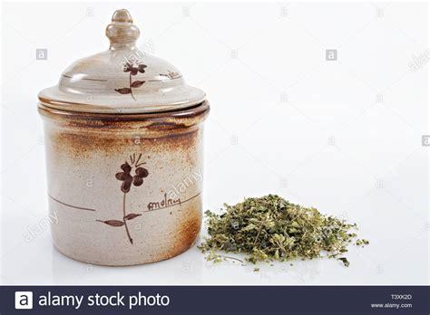 vaso di coccio origano stock photos origano stock images alamy