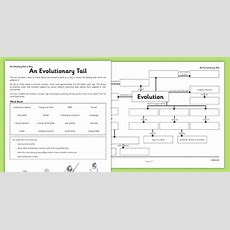 An Evolutionary Tail Worksheet  Worksheet  Evolution, Concept Map, An