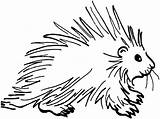 Porcupine Coloring Pages Animals Wildlife Prickly sketch template