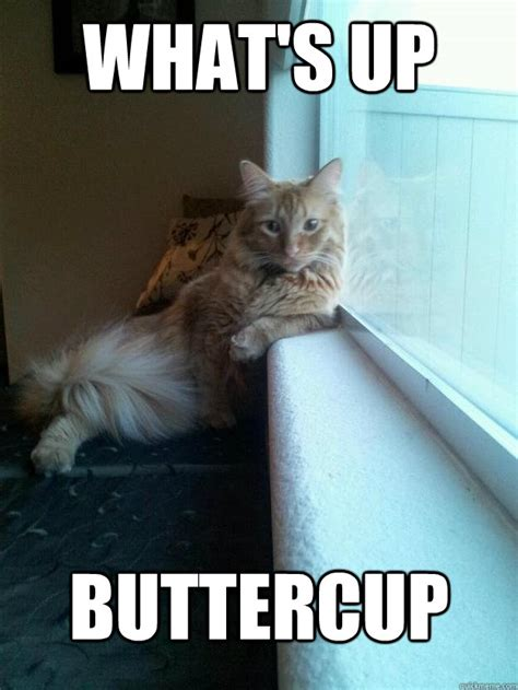 Funny What Memes - what s up buttercup misc quickmeme
