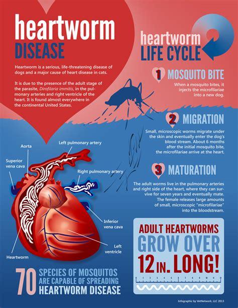 heartworm treatment jacksonville pet care infographics florida pet care tips fl