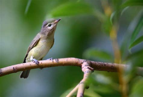 th1d9929v2 bird canada