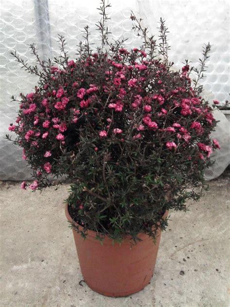 plante d hiver exterieur quelques liens utiles