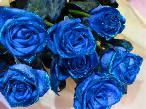 Beautiful Blue Roses Flowers