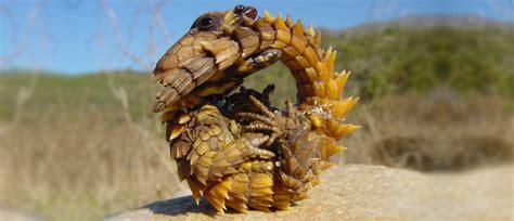 Top 10 Weirdest Lizards