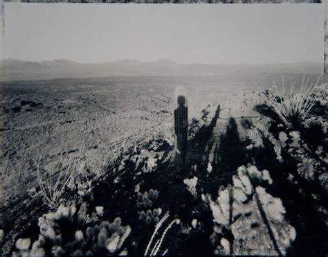 mark klett  portrait  saguaro    age