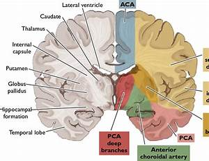 Figure 5 From Manual Ischemic Stroke   Pathophysiology And
