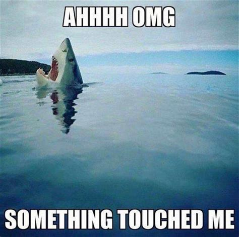 Shark Memes - 25 best ideas about shark meme on pinterest jaws meme funny shark pictures and cowboy pics