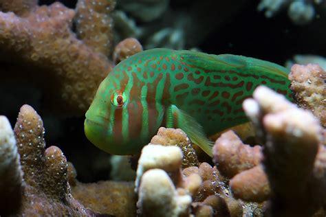 temperature aquarium poisson 28 images le de moune1 le pour savoir comprendre conna 238 tre