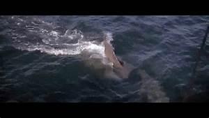 Jaws - (1975) - Shark Chase - YouTube