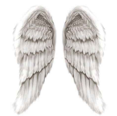 17 best images about wing 17 best images about wings on pi beta