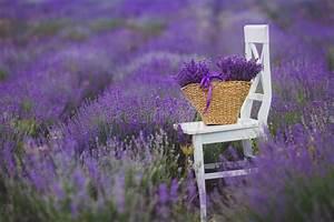 Prix De La Lavande : fleurs lilas de lavande dans un panier en osier image ~ Premium-room.com Idées de Décoration