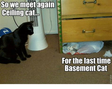 ️ 25+ Best Memes About Basement Cat Rubbermaid Plastic Storage Cabinets With Doors Hickory China Cabinet Built In Ironing Board Special Montessori Bead Discount Home Depot Kitchen Reviews Justrite Safety