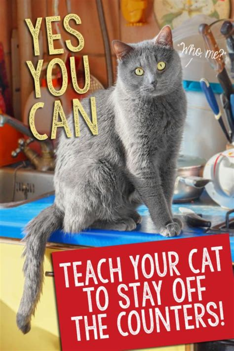 teach  cat  stay   counters