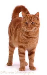 tom cat tom cat photo wp02166