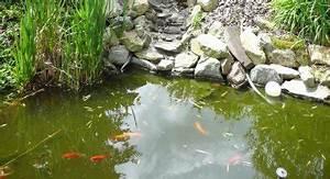 Goldfisch Haltung Im Teich : goldfische im gartenteich der ~ A.2002-acura-tl-radio.info Haus und Dekorationen
