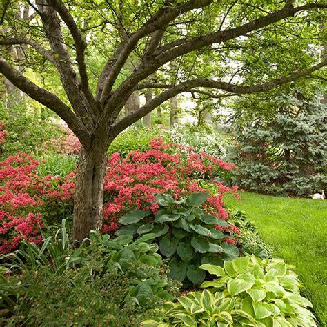 discover the power of azaleas