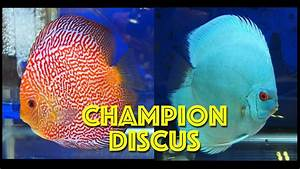 Best Championship Discus - YouTube