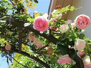 Rankhilfe Rosen Freistehend : rosen rankhilfe aus metall fabulous cool gallery of rankobelisk aus metall freistehend rosen ~ Orissabook.com Haus und Dekorationen